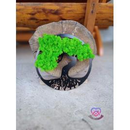 Bonsai cu licheni.Dimensiune 30 cm