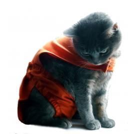 Chiloti pentru pisici tip salopeta sanitara - PetaS marime L ,38 cm