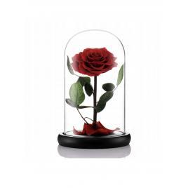 Trandafir Criogenat Rosu + Cutie Cadou