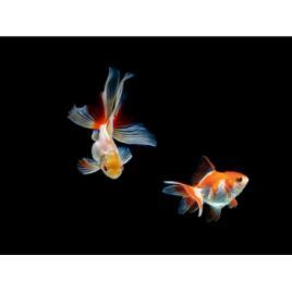 Panou sticla decorativa bucatarie protectie aragaz antistropire Print UV octopus imprimata Multicolor 950mmx650mm oct119-95x65