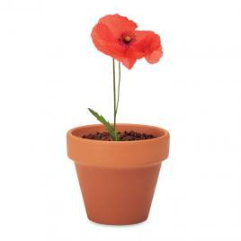 Floare de mac, ghiveci ceramica si seminte de plantat